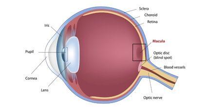 10438066 - eye macular degeneration, eps8